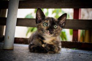 "kedi ""muhendisanne.com"""